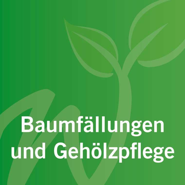 leistungen_baumfaellungen_gehoelzpflege